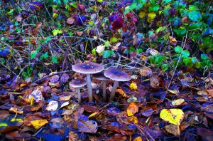 Psilocybin is naturally produced by over 200 species of mushrooms.